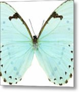 Close-up Of A White Butterfly Metal Print by Stockbyte