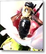 Close Up Of Bumble Bee On Flower Metal Print