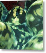 Close-up Of Giant Clam, Tridacna Gigas Metal Print