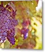 Close Up Of Grapes Metal Print
