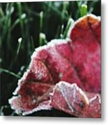 Close Up Of Leaf And Frost Metal Print
