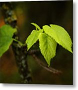 Close Up Of Leaves In Forest Metal Print