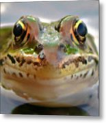 Close-up Of Leopard Frog Metal Print
