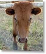 Close Up Of Longhorn Head Through Fence Metal Print