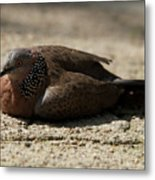Close-up Of Mottled Pigeon On Sandy Ground Metal Print