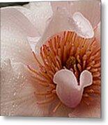 Close-up Of Pink Ladies Flowers Metal Print
