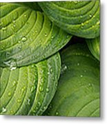 Close-up Of Raindrop On Green Leaves Metal Print