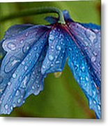 Close-up Of Raindrops On Blue Flowers Metal Print
