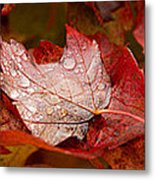 Close-up Of Raindrops On Maple Leaves Metal Print