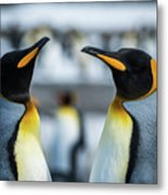 Close-up Of Two King Penguins In Colony Metal Print