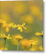 Close Up Of Yellow Flower With Blur Background Metal Print