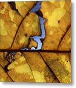 Close Up Of Yellow Leaf Metal Print