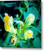 Close Up Of Yellow Wild Flowers Metal Print
