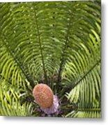 Close-up Palm Leaves Metal Print