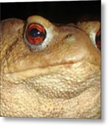 Close Up Portrait Of A Common Toad Metal Print