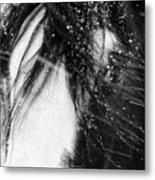 Close Up Portrait Of A Horse In Falling Snow Metal Print