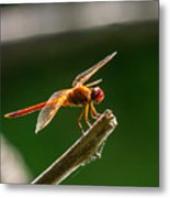 Close Up Red Dragonfly Metal Print