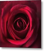 Close Up Red Roses Flowers Art Work Photography Metal Print