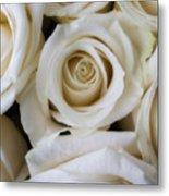 Close Up White Roses Metal Print