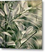 Close Up Wild Flower Metal Print