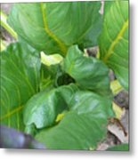 Close Up With Chard Metal Print