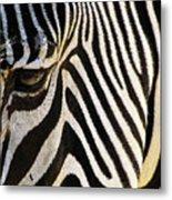 Close Up Zebra Metal Print