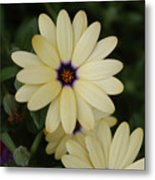 Close View Of A Flower Metal Print