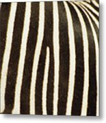 Close View Of A Zebras Stripes Metal Print by Stacy Gold