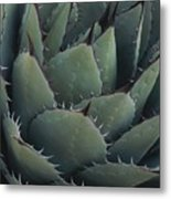 Close View Of An Agave Plant Metal Print