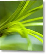 Close View Of Green Flower Metal Print