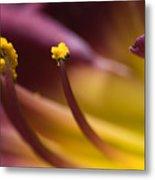 Close View Of Stamen Of A Flower Metal Print