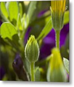 Close View Of Two Yellow Symphony Metal Print
