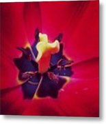 Close With Creation Metal Print