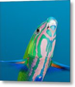 Closeup Of A Brighly Colored Crescent Metal Print