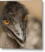 Closeup Of A Captive Emu Metal Print