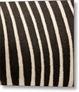 Closeup Of A Grevys Zebras Coat Equus Metal Print