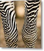Closeup Of A Grevys Zebras Legs Equus Metal Print