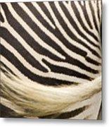 Closeup Of A Grevys Zebras Rear End Metal Print