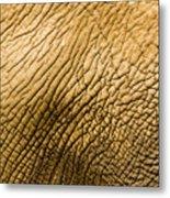 Closeup Of An African Elephant Metal Print