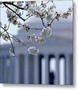 Closeup Of Cherry Blossoms Metal Print