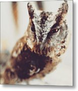 Closeup Portrait Of A Young Owl Looking At The Camera Metal Print