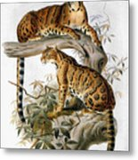 Clouded Leopard, 1883 Metal Print