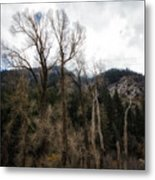 Cloudy Sky's Bare Trees Metal Print