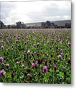 Clover Field Wiltshire England Metal Print