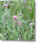 Clover In The Grass Metal Print
