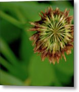 Clover Past Due Metal Print