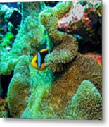 Clown2 With Anemone Metal Print