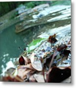 Cluster Of Leaves Metal Print