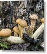 Cluster Of Mushroms In Front Of Stump Metal Print