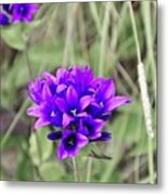 Clustered Bellflower Metal Print
